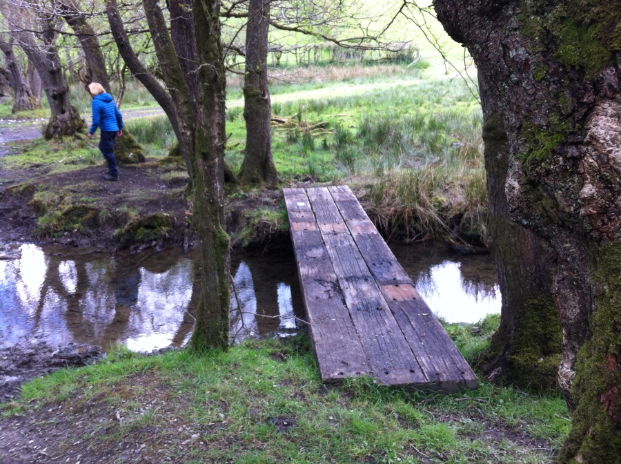 Building bridges in beautiful Carmarthenshire, Trail